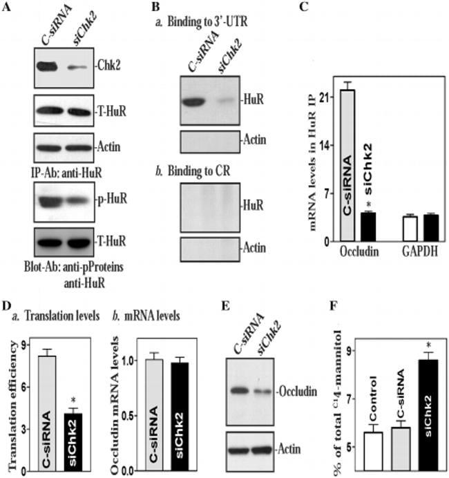 Phosphoserine/threonine/tyrosine Antibody