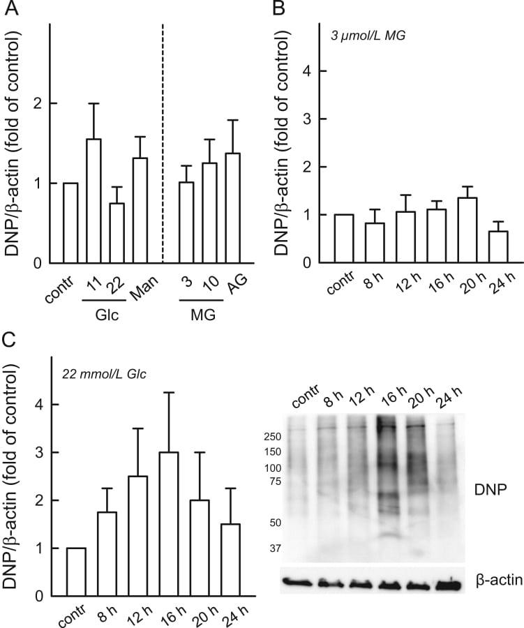 Dinitrophenyl-KLH Antibody