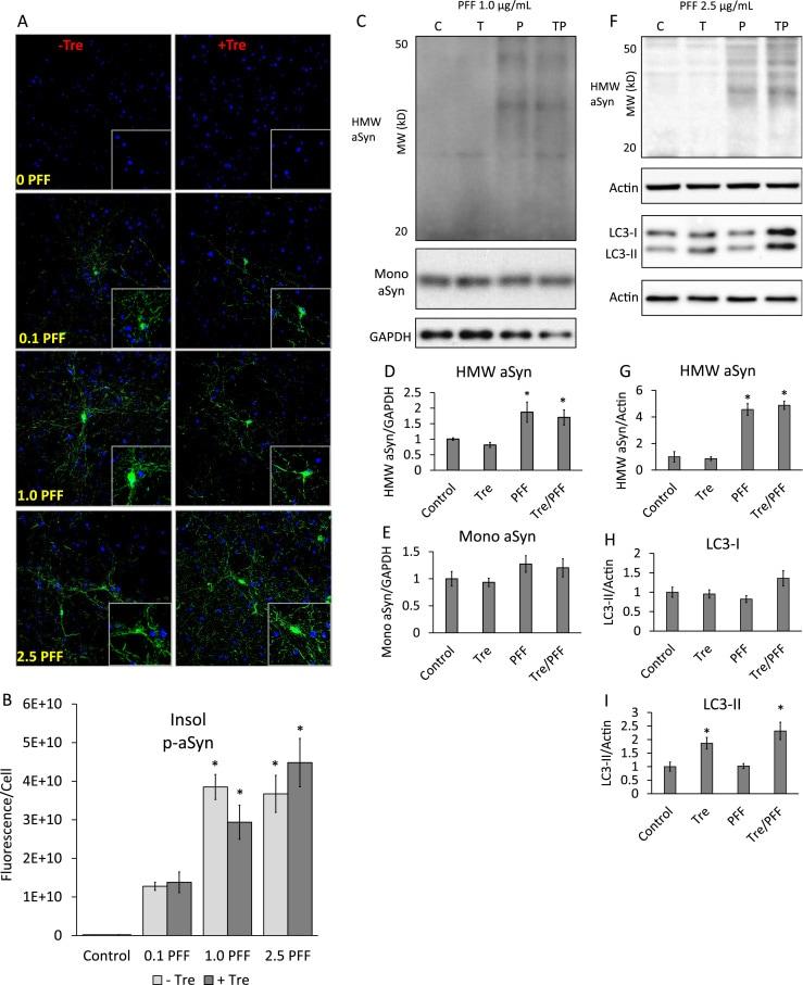 Phospho-alpha Synuclein (Ser129) Antibody