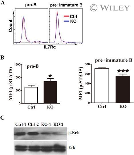 CD45R (B220) Antibody