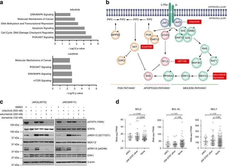 STAT5 alpha/beta Antibody