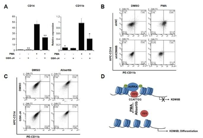 CD14 Antibody