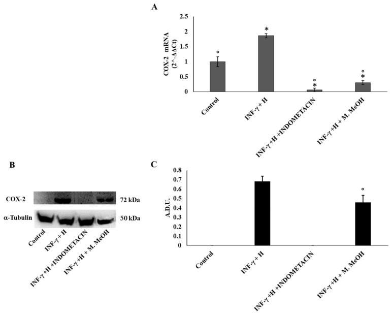 COX2 Antibody