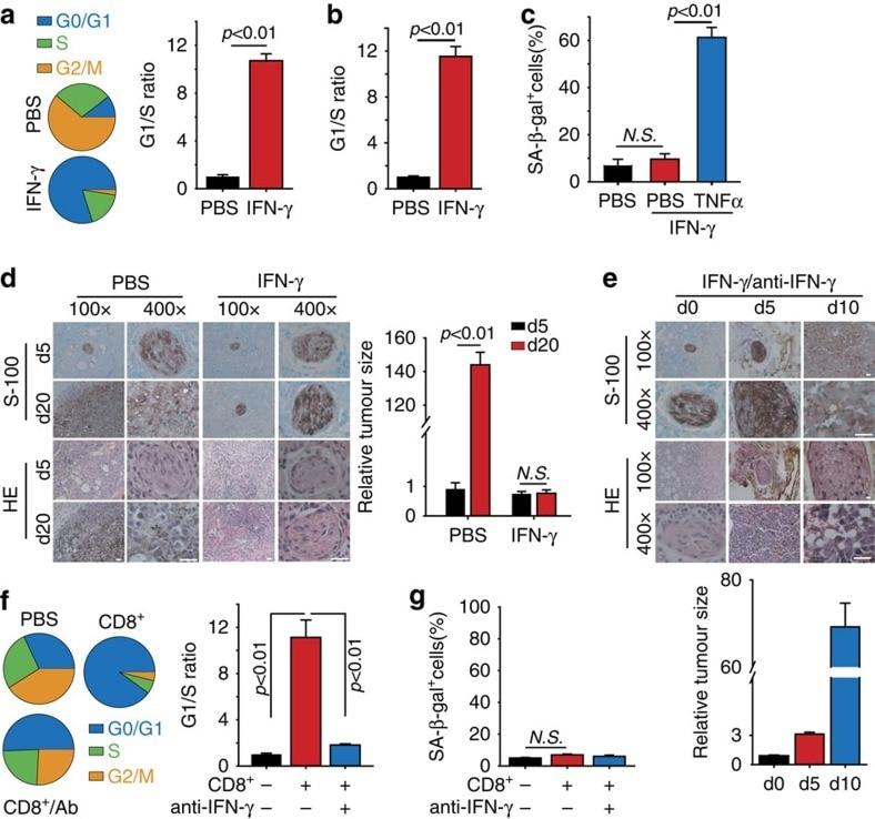 CD133 Antibody in Flow Cytometry (Flow)