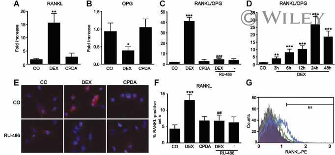 CD254 (RANK Ligand) Antibody