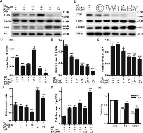 Phospho-Tau (Thr212) Antibody