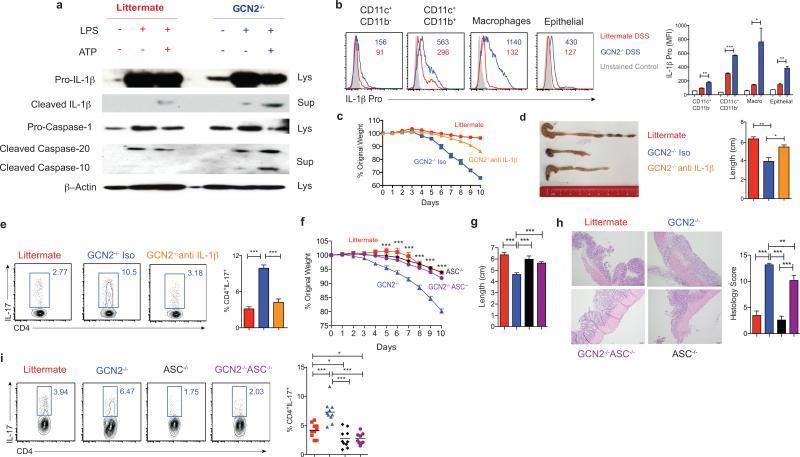 IL-1 beta (Pro-form) Antibody