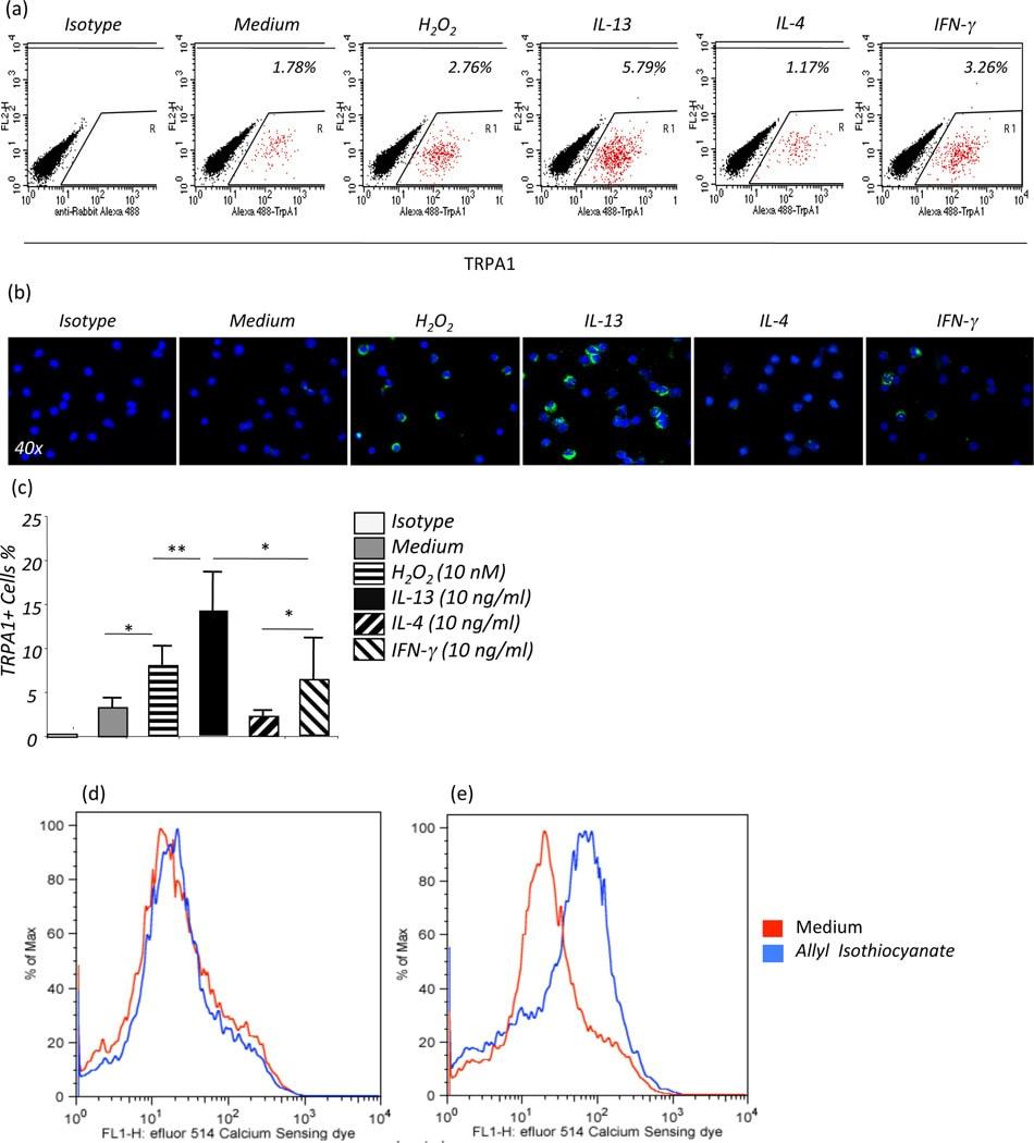 CD117 (c-Kit) Antibody