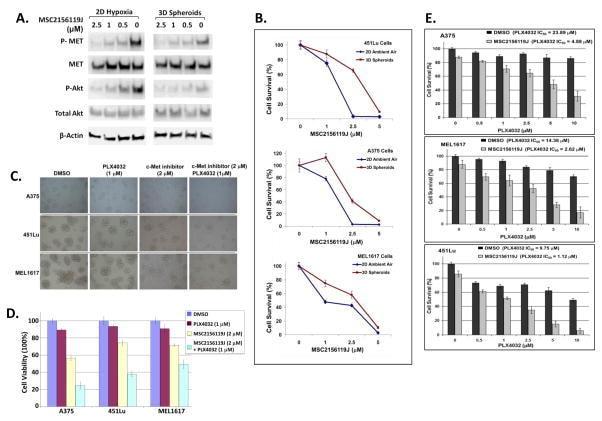 Phospho-c-Met (Tyr1003) Antibody