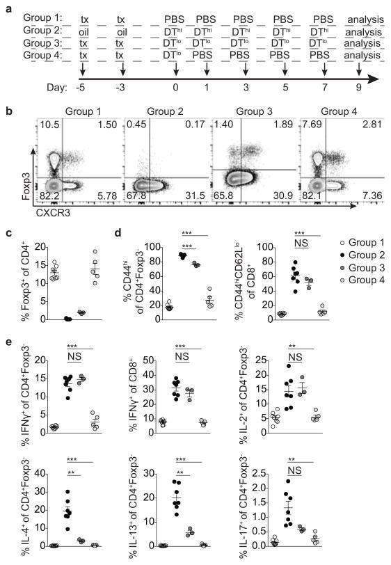 CD62L (L-Selectin) Antibody