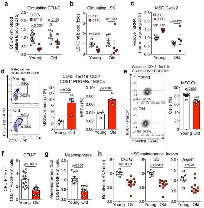 CD51 (Integrin alpha V) Antibody