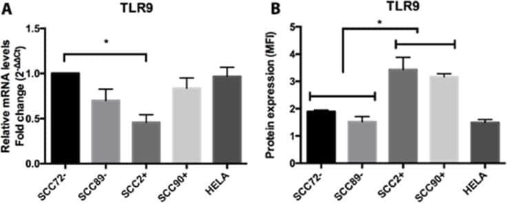 CD289 (TLR9) Antibody