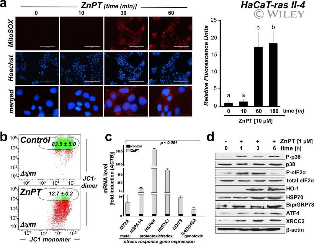XRCC2 Antibody