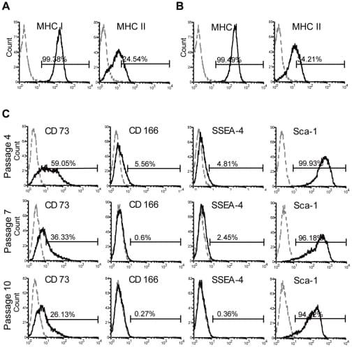 MHC Class I (H-2Kd/H-2Dd) Antibody