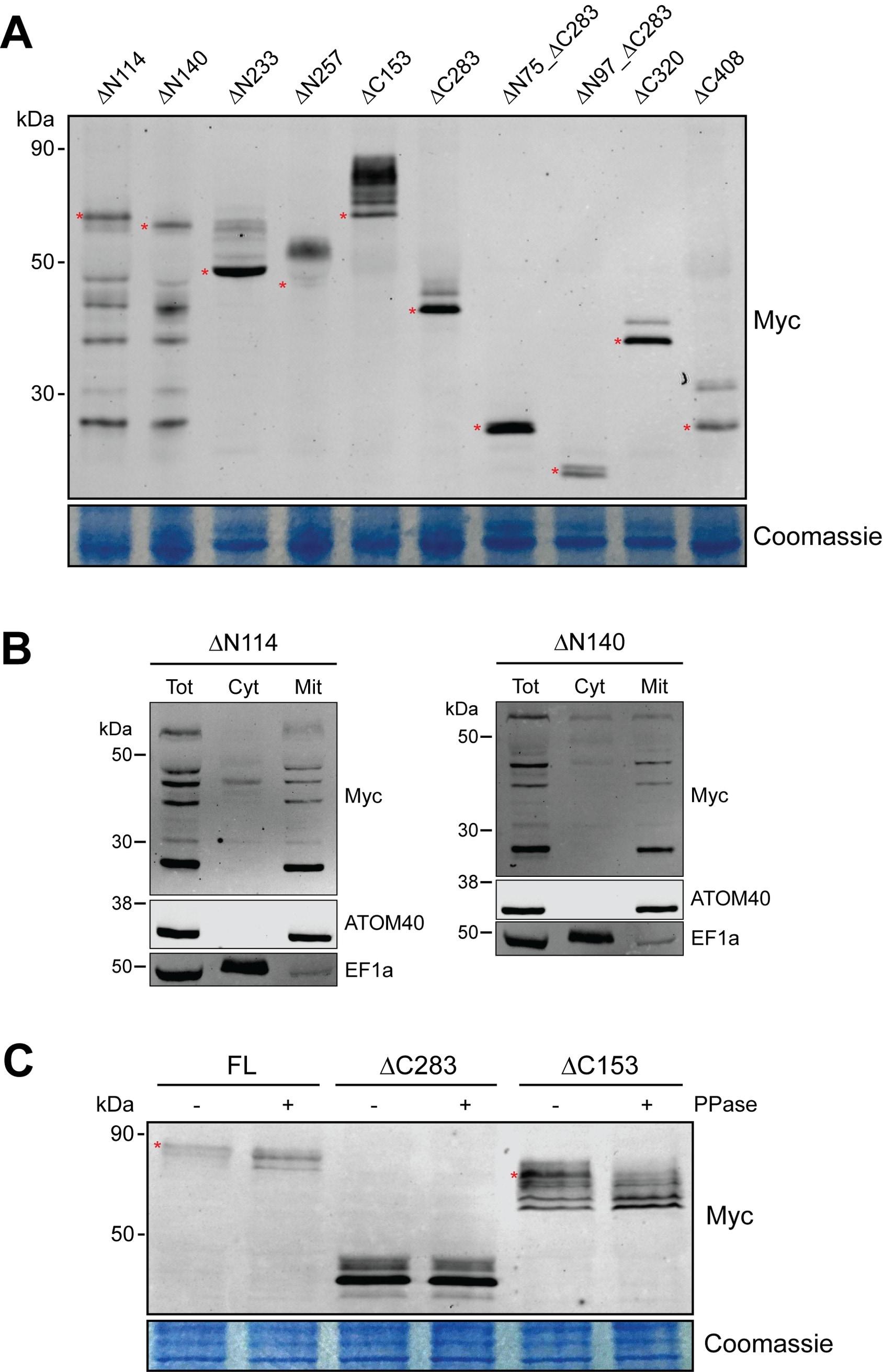 C Myc Antibody Monoclonal 9e10 Process Flow Diagram Of Xylene
