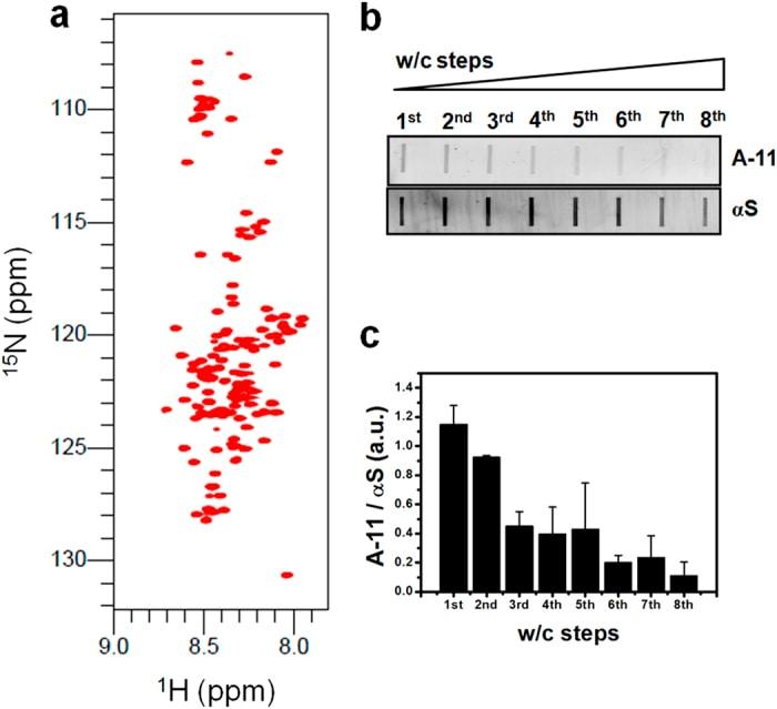 alpha Synuclein Antibody