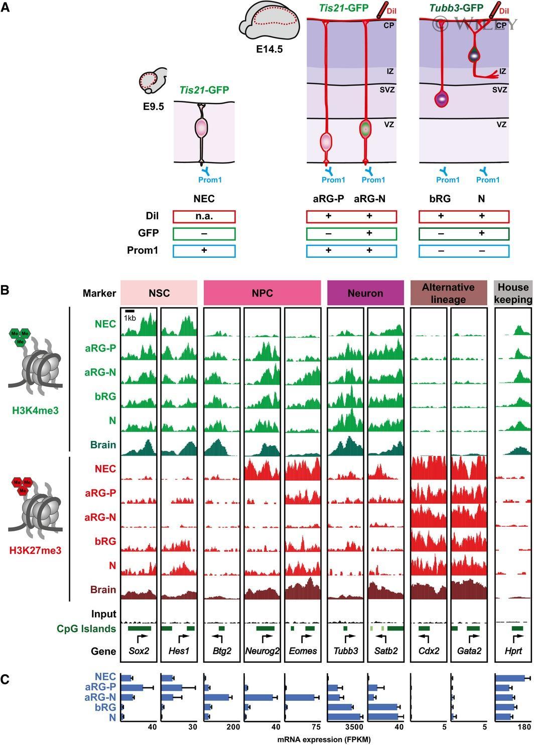 CD133 (Prominin-1) Antibody in Flow Cytometry (Flow)