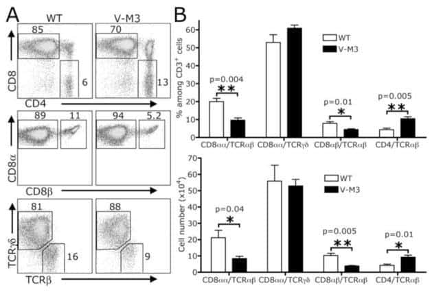 TCR gamma/delta Antibody