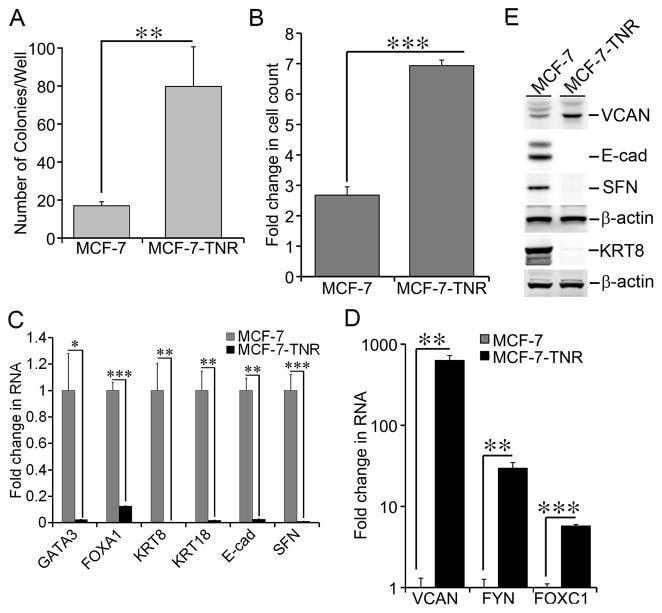 Versican V0, V1 Neo Antibody