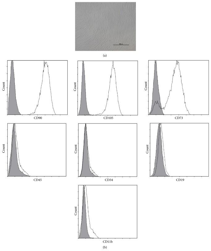 CD11b (activation epitope) Antibody