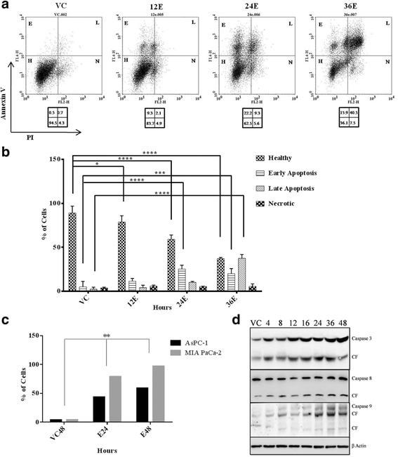 Active/Pro-Caspase 3 Antibody