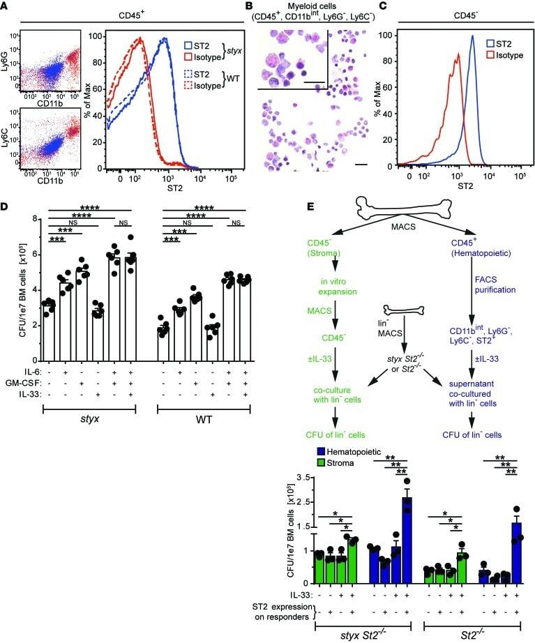 IL-33R (ST2) Antibody