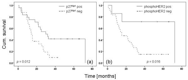 Phospho-ErbB2 (HER-2) (Tyr1248) Antibody