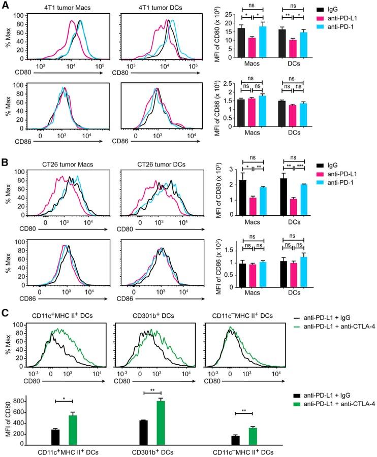 CD274 (PD-L1, B7-H1) Antibody