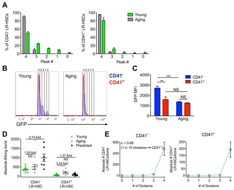 CD41a Antibody