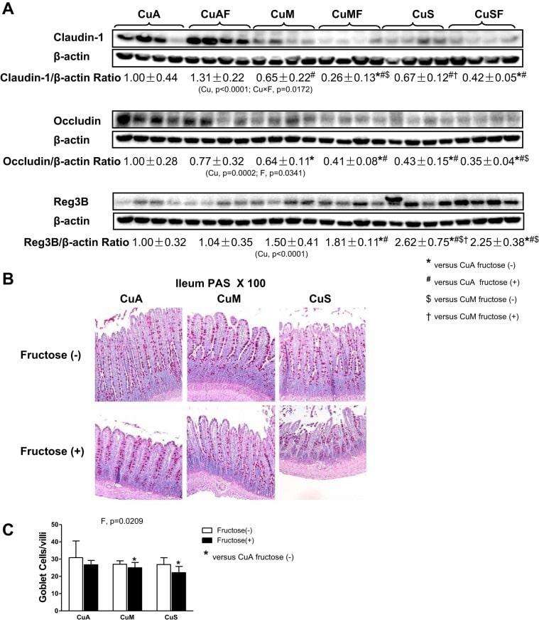 Claudin 1 Antibody