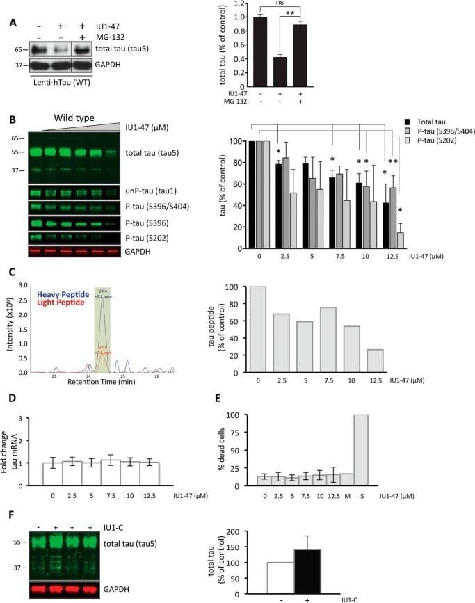 Phospho-Tau (Ser396) Antibody