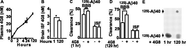 beta Amyloid (1-40) Antibody