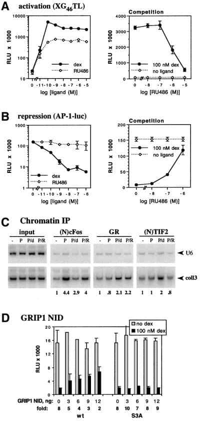 SRC2 Antibody in ChIP assay (ChIP)
