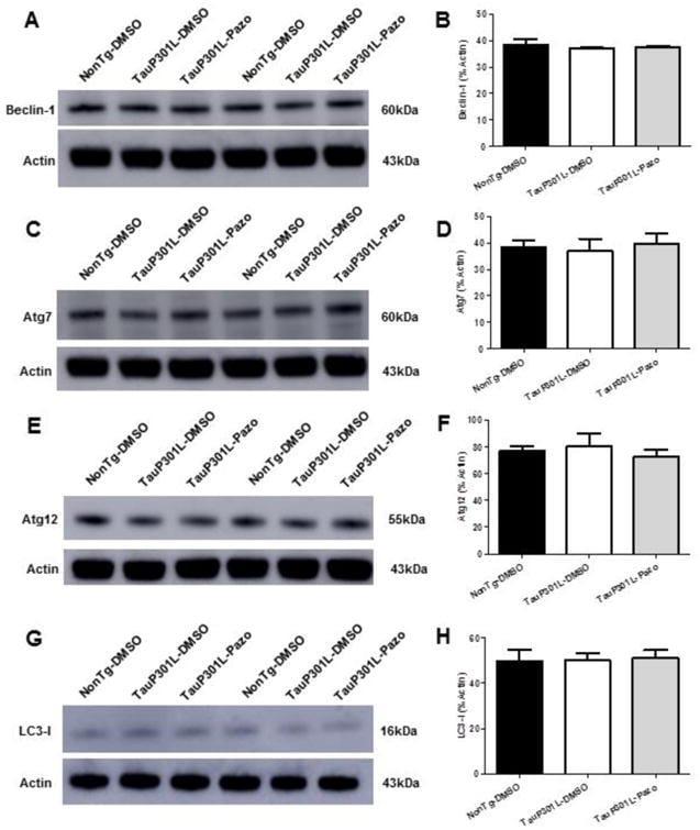 LC3A/LC3B Antibody