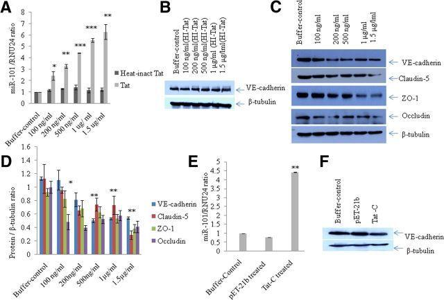 Caspase 1 Antibody