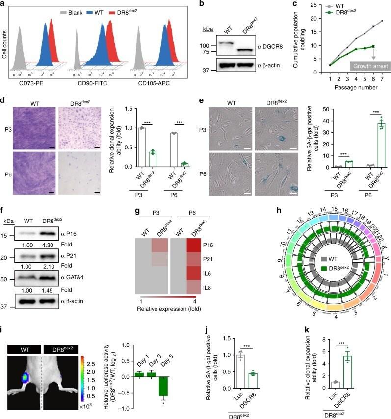 CD105 (Endoglin) Antibody