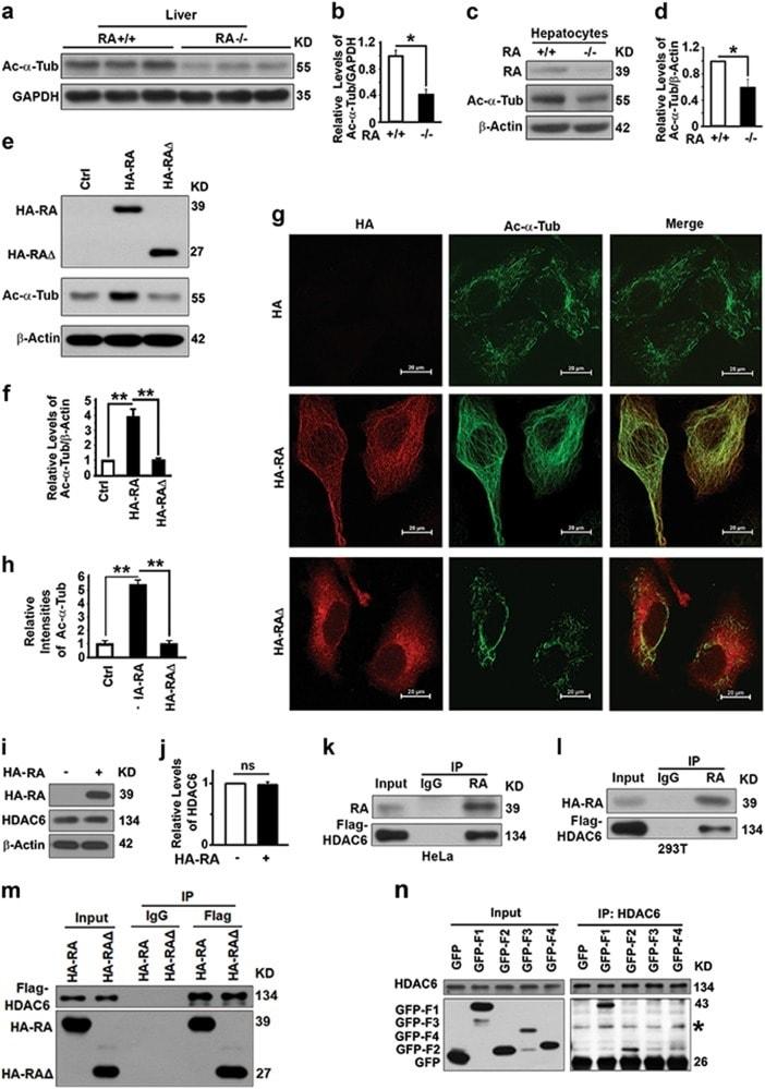 RASSF1A Antibody