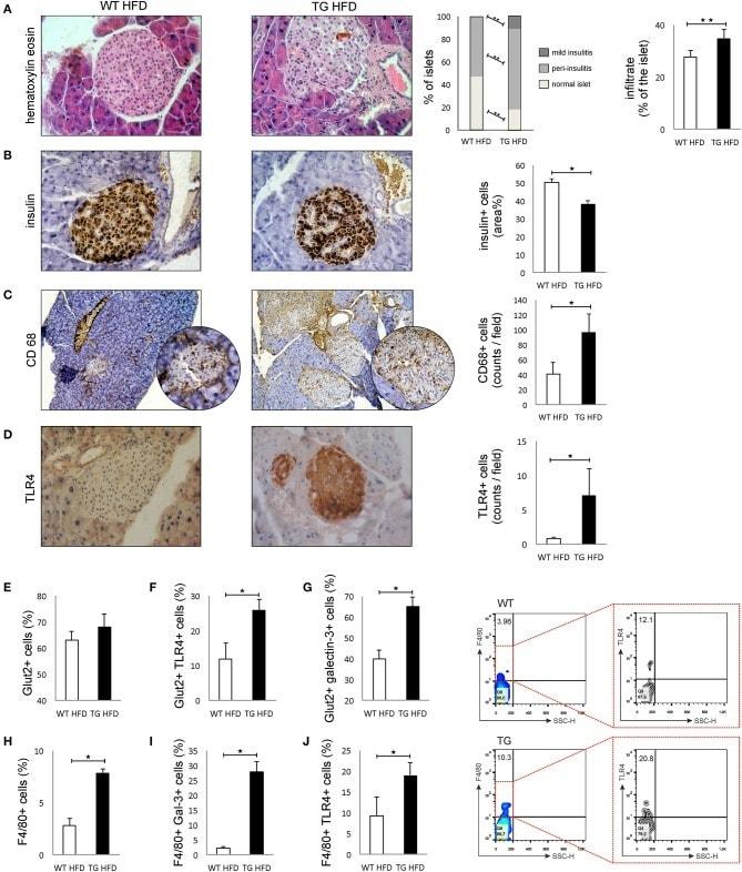 CD284 (TLR4) Antibody in Immunohistochemistry (IHC)