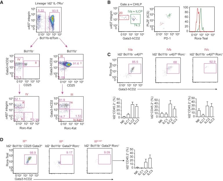 CD135 (Flt3) Antibody