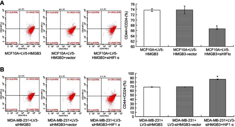 CD44 Antibody