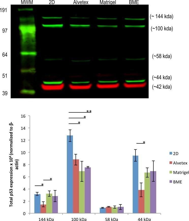 Phospho-Tau (Thr231) Antibody