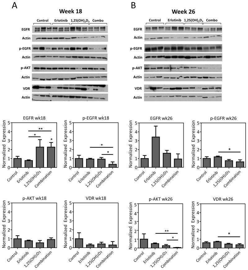 Phospho-Tau (Ser214) Antibody