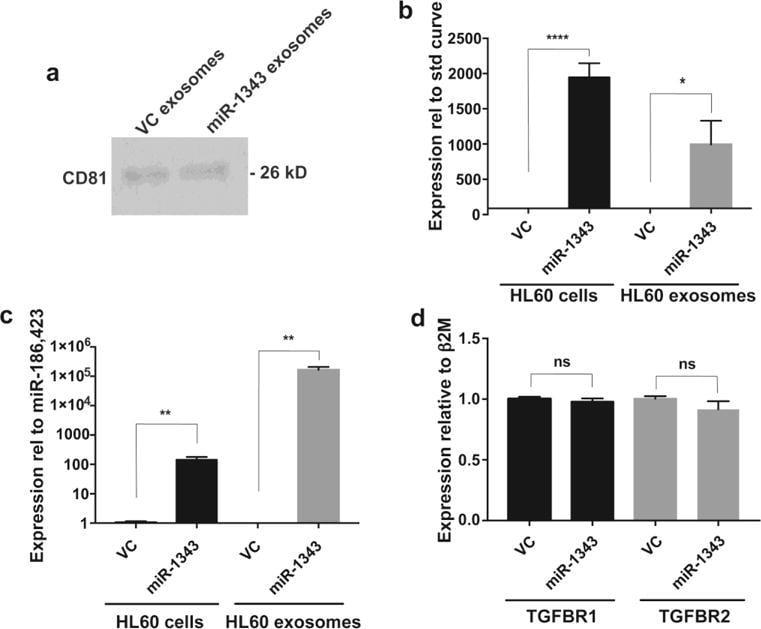 Phospho-PDGFRA/PDGFRB (Tyr572, Tyr574) Antibody