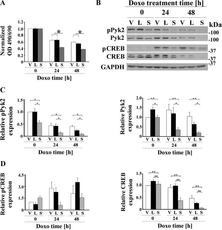 Phospho-PYK2 (Tyr402) Antibody